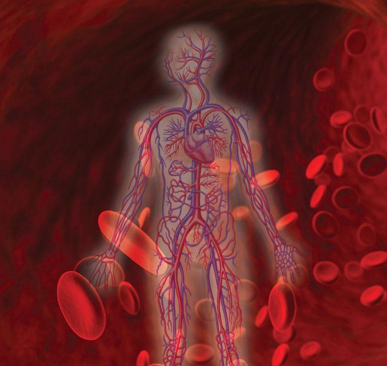 תמונה של כלי דם