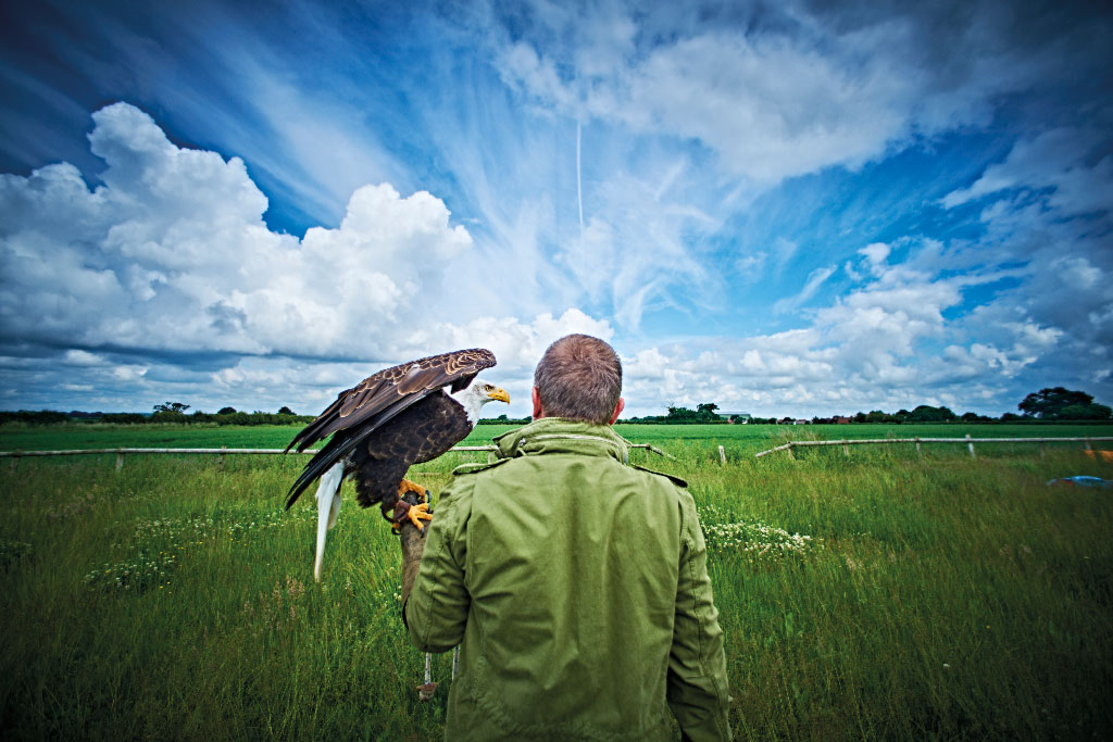 תמונה של אדם מאי עם נשר