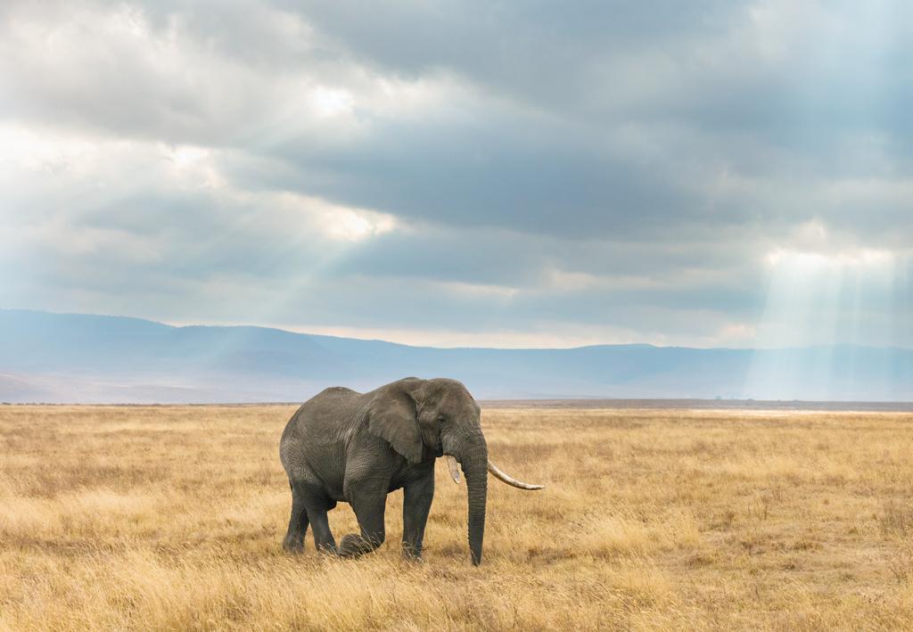 תמונה של פיל באפריקה