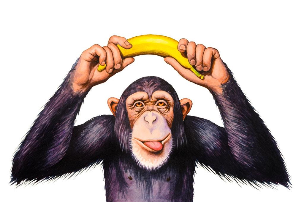 תמונת אילוסטרציה קוף
