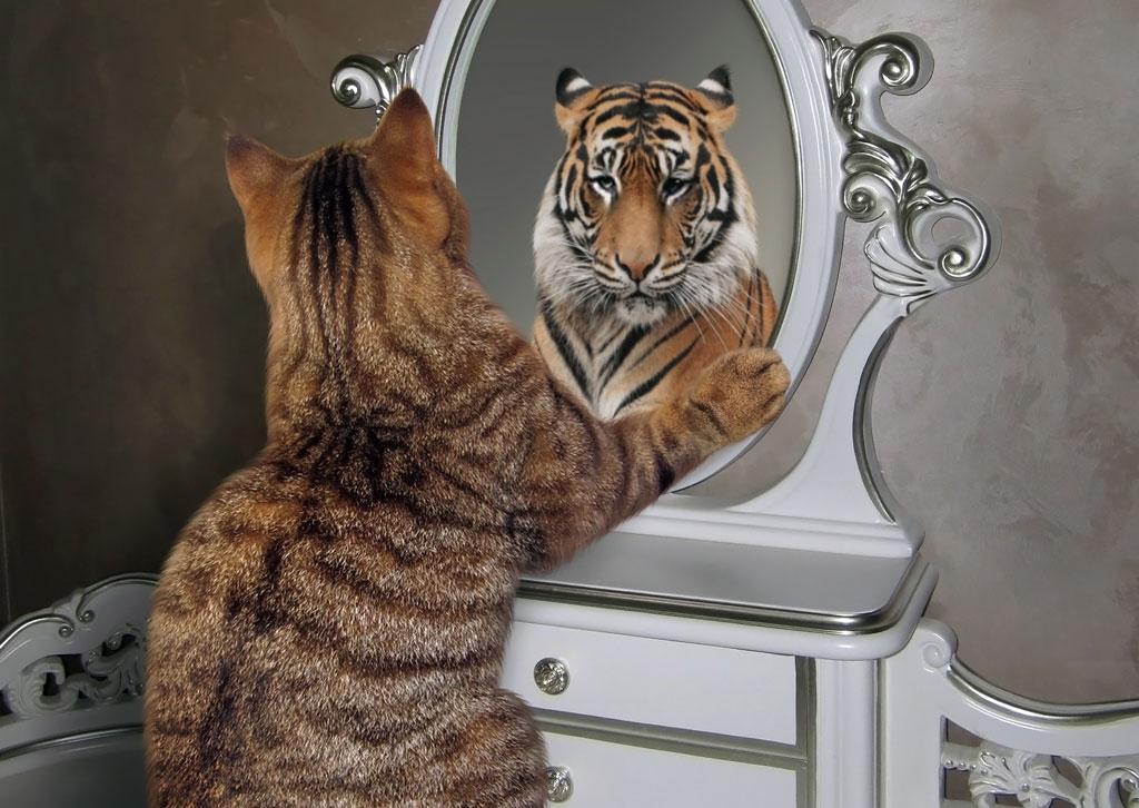 תמונת אילוסטרציה חתול-נמר